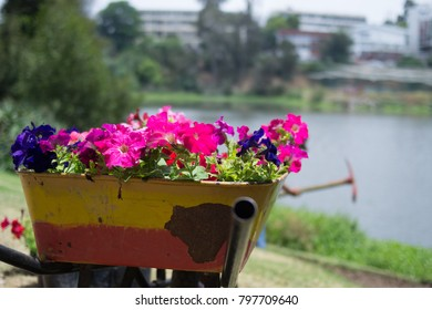 Bunch of flowers with a lake at the background