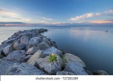 a bunch of flowers lying on the breakwater