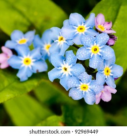 A bunch of forget me nots...