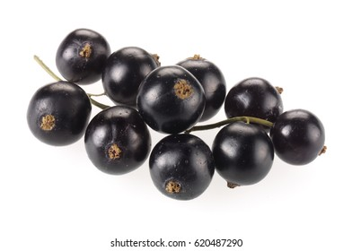 BUNCH OF FRESH BLACKCURRANTS ON WHITE