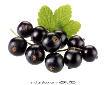 Pictures Of Black Currants