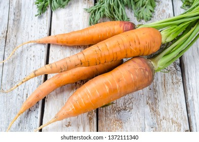 Bunch of fresh carrots with green leaves on rustic white wooden background. Vegetable. Food. Copy space, top view