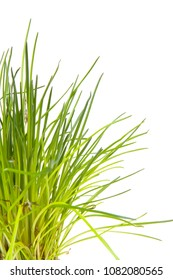 Bunch of fresh chives over white background