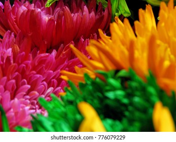 bunch of fresh colorful flowers close up