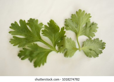 Bunch of fresh coriander leaves over white background
