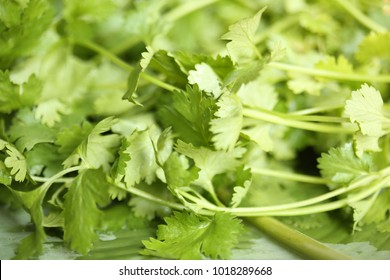Bunch of fresh coriander leaves over nature background