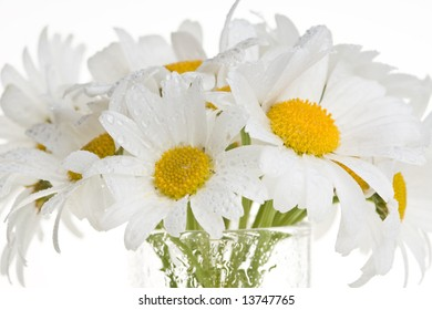 Bunch of fresh cut white daisies arranged in a vase.