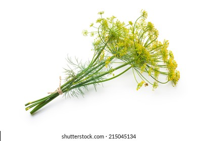 Bunch of fresh dill with flower isolated on white background. Kitchen herbs