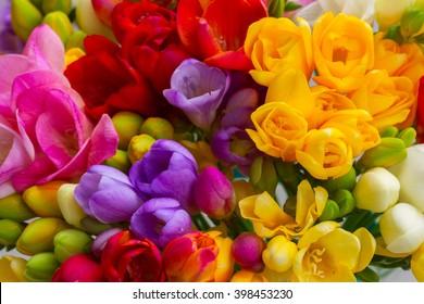 Bunch of fresh freesia flowers close up macro