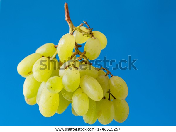 Bunch of fresh grapes. Fruits on a blue background. Isolated from background. Vegetarian food. Fruit in a slimming diet.