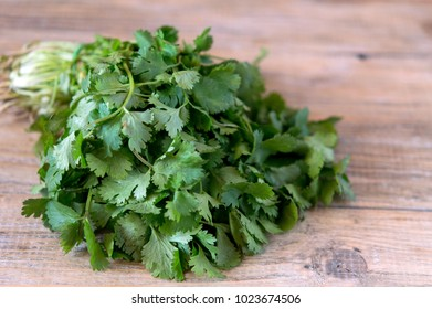 a bunch of fresh green coriander for cooking your favorite salad, soup or sauce for a fragrant shish kebab or fish, marinade