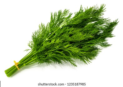 bunch fresh green dill isolated on white background.