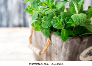 Bunch of Fresh green organic mint leaf on wooden table closeup. Selective focus. Mint