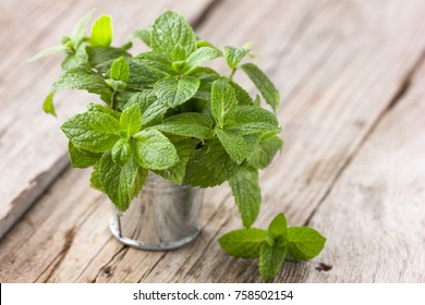 Bunch of Fresh green organic mint leaf on wooden table .
