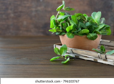 Bunch of Fresh green organic mint leaf on wooden table closeup.