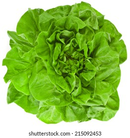 Bunch of Fresh Green Salad surface top view  Isolated On White Background