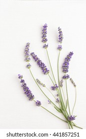 Bunch of fresh lavender flowers on white background
