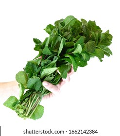 Bunch of fresh mint isolated on white background