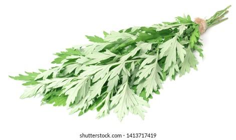 bunch of fresh mugwort twigs isolated on white background