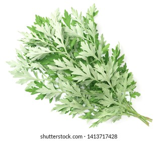 bunch of fresh mugwort twigs isolated on white background, top view