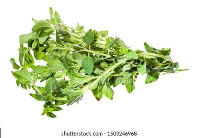 bunch of fresh Oregano herb isolated on white background