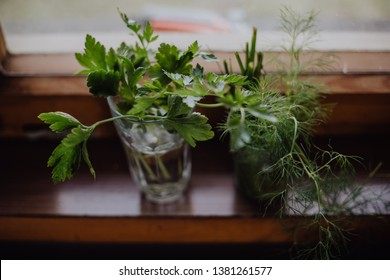 bunch of fresh parsley and dill weed in a glass on a windowsill