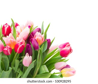 bunch of fresh   pink and purple  tulip flowers in glass vase   isolated on white background