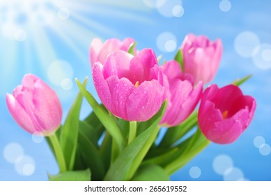 bunch of fresh pink tulips with water drops against blue sky