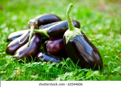 Bunch of fresh raw eggplants in grass