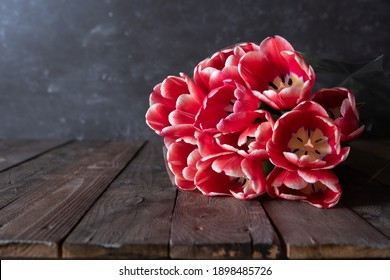 Bunch of fresh red tulips on wooden vintage planks in front of gray concrete wall. Spring background for motherday and easter with space for text.