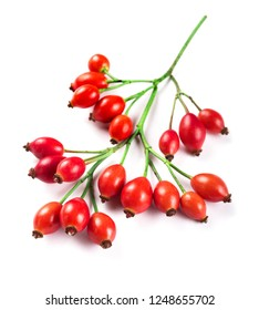 bunch of fresh rosehips isolated