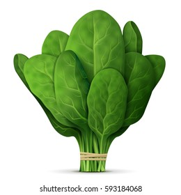 Bunch of fresh spinach close up. Green raw spinach leaves isolated on white background. Qualitative illustration for agriculture, vegetables, cooking, health food, gastronomy, olericulture, etc