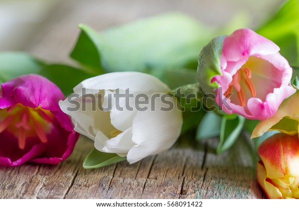 Bunch of fresh spring colorful tulips on old vintage wooden board