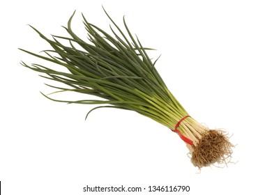 Bunch of fresh spring onion