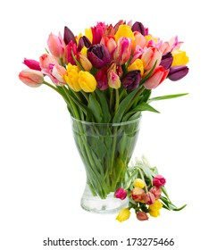 bunch of fresh spring tulips  in vase  isolated on white background