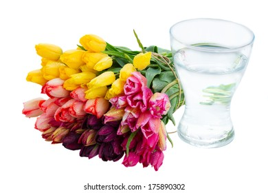 bunch of fresh spring tulips  and vase   isolated on white background