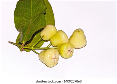A bunch of fresh and sweet Indian white Syzygium samarangense or java apple or wax apple fruit on white isolated background with green leaves.Selective focus and side angle view.