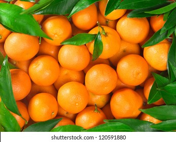 Bunch of fresh tangerines oranges on market
