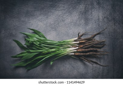Bunch of freshly harvested organic salsify with green branches on rustic scratchy background
