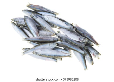 Bunch of frozen sprat fish isolated on a white background
