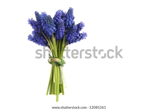 Bunch of grape hyacinths isolated on white