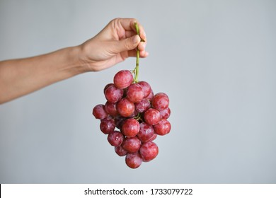 Bunch of grapes in the hands of a girl. Handpicked ripe grapes closeup. Red wine grapes. Fresh juicy berries. Healthy organic sweet fruit. Delicious autumn natural dessert. Vitamins diet for woman