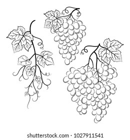 Bunch of Grapes with Leaves and Berries Black Contour Pictograms Isolated on White Background.