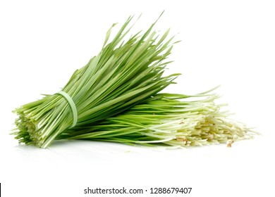 A bunch of grass isolated on white background