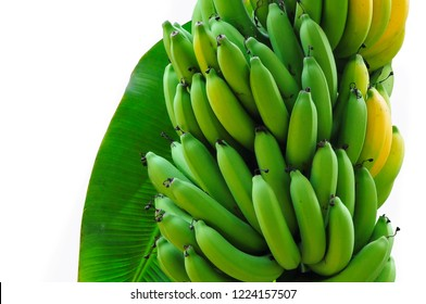 """A bunch of green bananas (Musa (AAA group) """"Kluai Hom thong"""" Banana famous in Thailand which are in demand in the international market on white."""