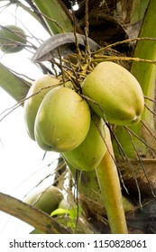 A bunch of green coconut