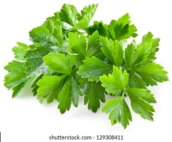 Bunch of green coriander with drops isolated on a white background.