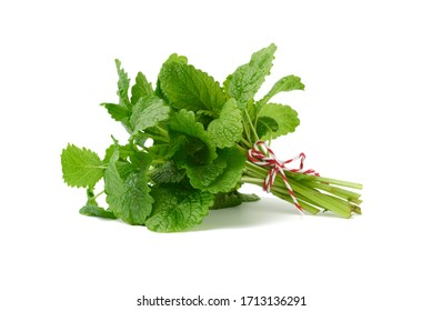 bunch of green fresh mint tied with a rope, flavorful seasoning for food and cocktails isolated on a white background