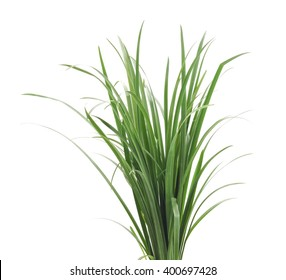 A bunch of green grass isolated on a white background.