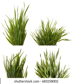 A bunch of green grass. Isolated on white background. Set